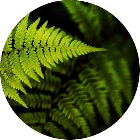 Fundraising Services Fern